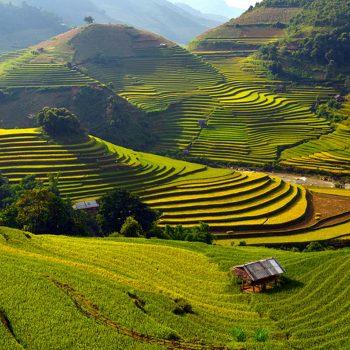 2.-Rice-Terrace-Fields-in-Mu-Cang-Chai-Vietnam